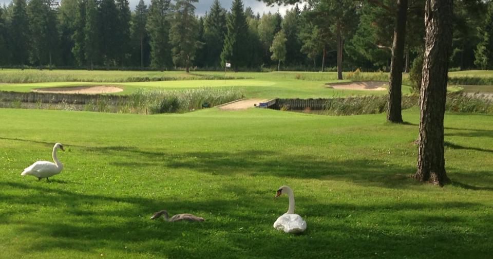AJAKIRI GOLF! GREEN CARD TASKU! Niitvälja alustab uute golfarite küpsetamist